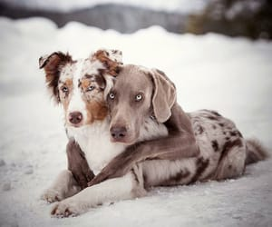 animals, cuddling, and dogs image