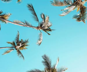 blue, wanderlust, and coconut image