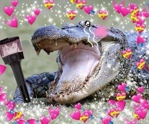 alligator, idol, and kpop image