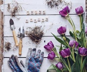 flowers, nature, and season image
