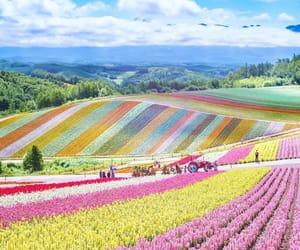 landscape, nature, and japan image