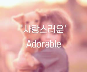 adorable, korea, and 사랑 image