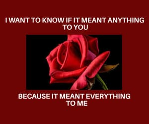 quotes, red, and rose image