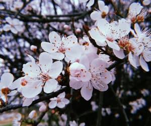 flowers, spring, and huji image