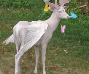 albino, animal, and faeries image