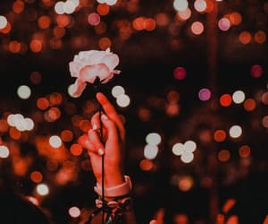 rose, shawn mendes, and wallpaper image