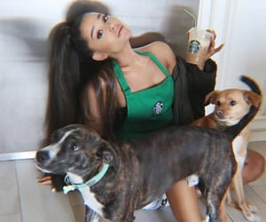 dogs, hairstyle, and starbucks image