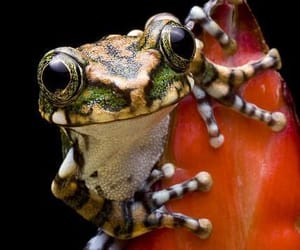 frog, nature, and animal image