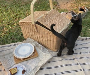 cat and picnic image