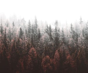 wallpaper, forest, and white image