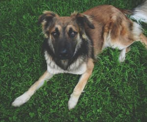 animals, love, and dog image