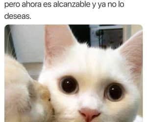 funny, gatito, and meme image