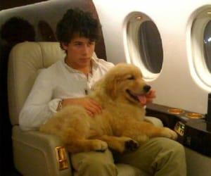2010, dog, and golden retriever image
