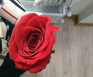 flower, xg, and rose image