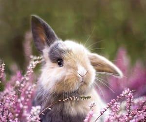 animals, baby, and beautiful image