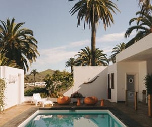 fashion, palms, and pool image