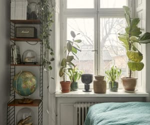 aesthetic, decoration, and window image