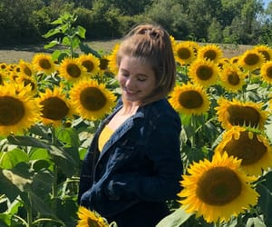 flowers, sunflowers, and pretty image