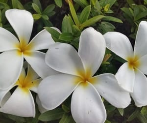white and white flowers image