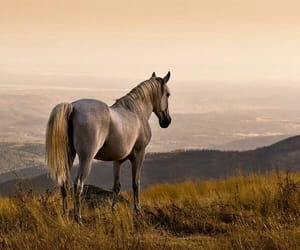 horse, beauty, and equine image