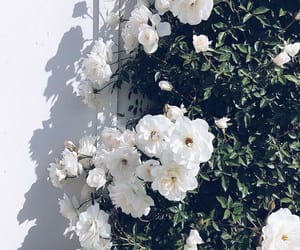 flowers, aesthetic, and beautiful image