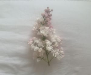flowers and soft image