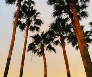 palm trees, sky, and love image