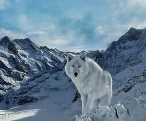wolf, animals, and mountains image