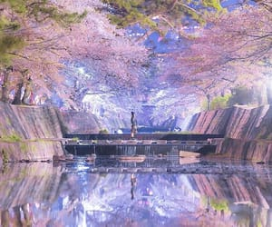 blue, cherry blossom, and japan image