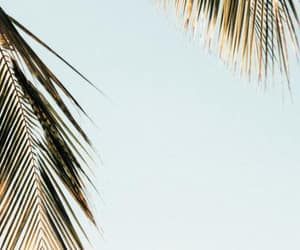 background, palm, and weheartit image