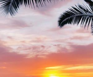Aloha, background, and hawaii image
