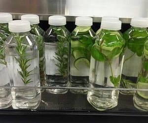plants, green, and water image