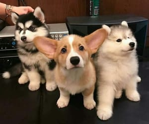 cute, babies, and puppies image