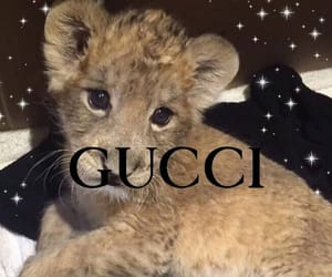 gucci, lion, and theme image