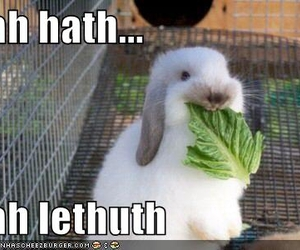 bunny, lettuce, and lol image