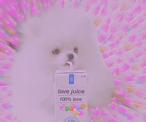 dog, hearts, and juice image