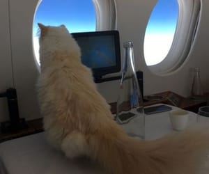 airplane, cat, and cute image