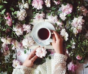coffee, photography, and flowers image