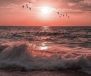 birds, sea, and sunset image