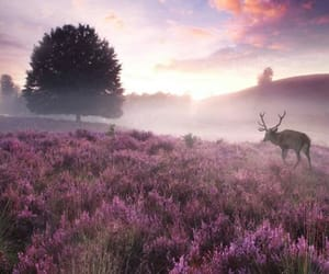 nature and netherlands image