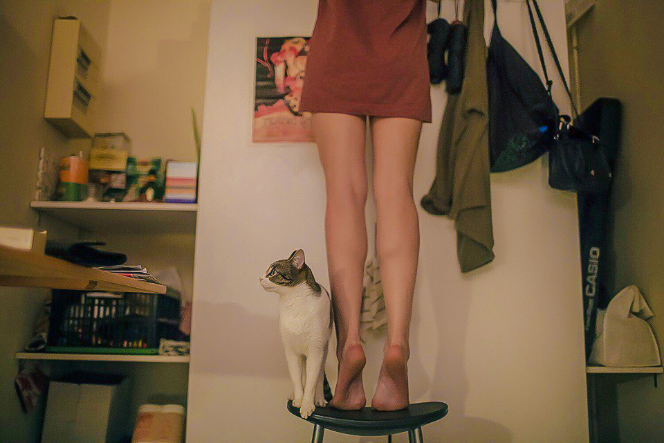 aesthetic, cat, and girl image