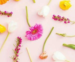 background, flowers, and orange image