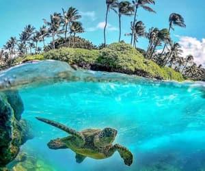hawaii, ocean, and turtle image