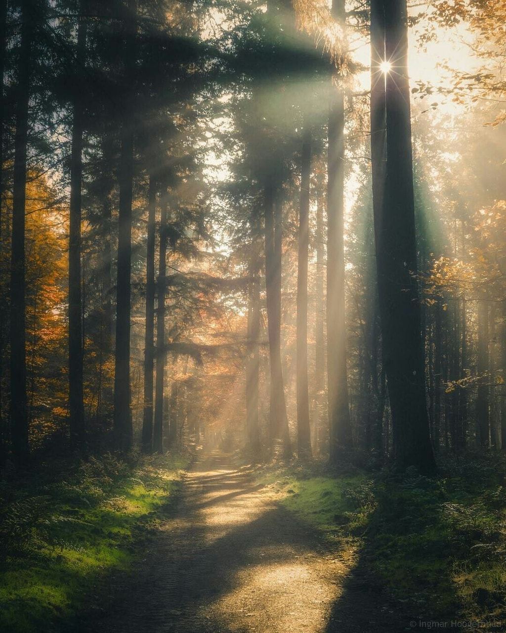 forest, green, and horizon image
