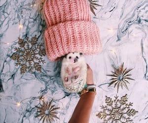 animals, christmas, and pink image