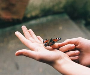 butterfly, vintage, and animal image