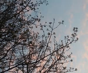 bloom, tree, and clouds image