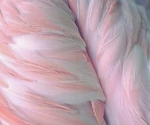 pink, feather, and aesthetic image