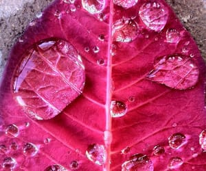 leaves and pink image