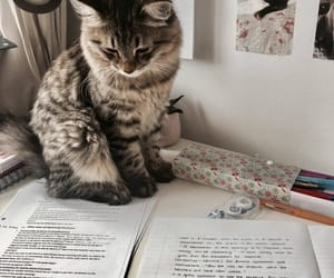 cat, animal, and study image